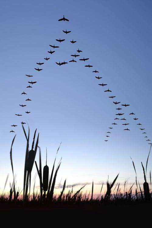 Flying V formation