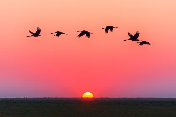 animals-backlit-dawn-1126384